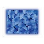 Blue Hydrangea Blossoms postcards