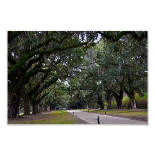 Boone Hall Avenue of Oaks in South Carolina Poster