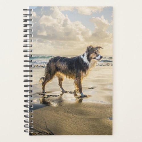 Border Collie Beach Fun   Dog Planner