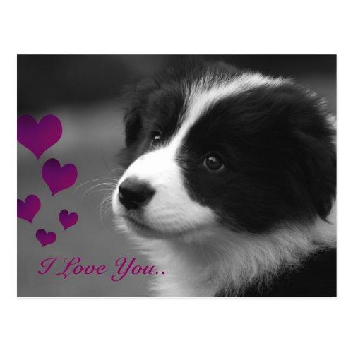 Border Collie, I Love You Postcard