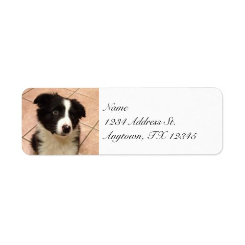 Border Collie Puppy return address labels