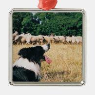 Border Collie Watching Sheep Christmas Ornament