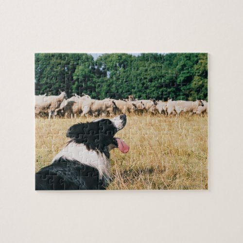 Border Collie Watching Sheep Jigsaw Puzzle