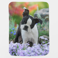 Boston Terrier Dog Puppy Swaddle Blanket