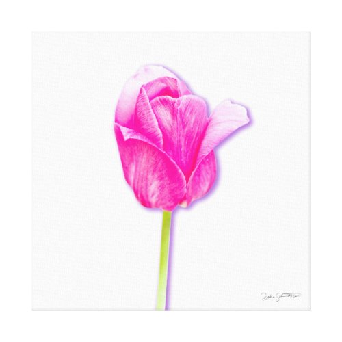 Bright Pink Tulip Floral Art Canvas wrappedcanvas
