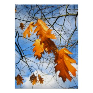 Brown leaves - Poster print