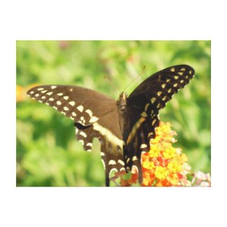Butterfly in South Carolina, print on canvas