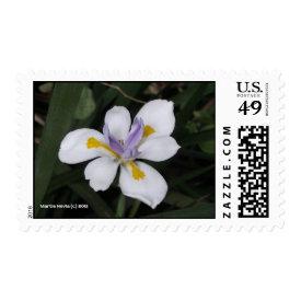 Butterfly Iris - Postage