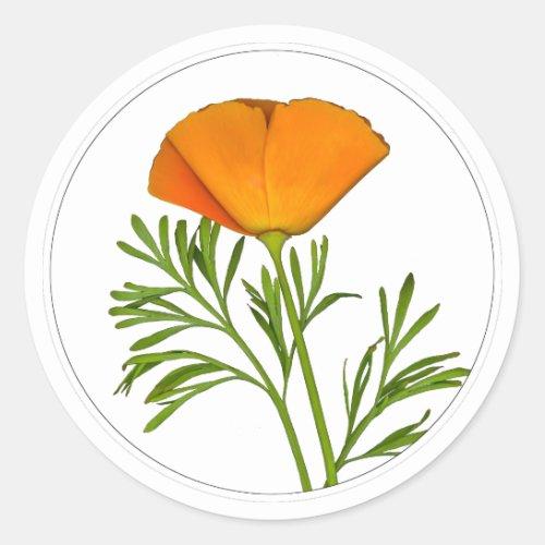 California Poppy in a Circle - Classic Round Sticker