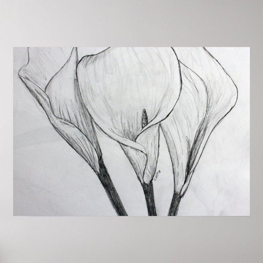 Calla Lilies Pencil Sketch Drawing Art Print