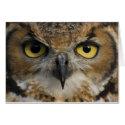 Card - Owls Eyes card