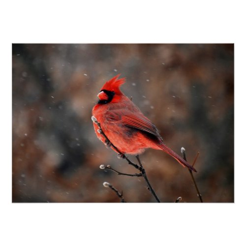 Cardinal in a Snowstorm print