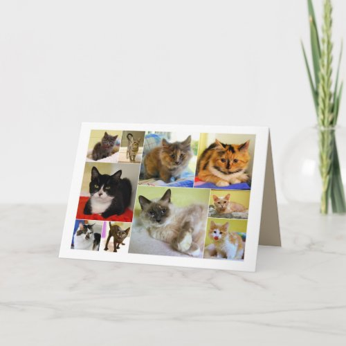 Cat Collage Birthday Card card