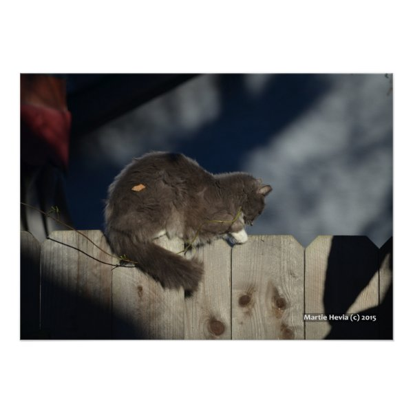 Cat on Fence (16) Poster