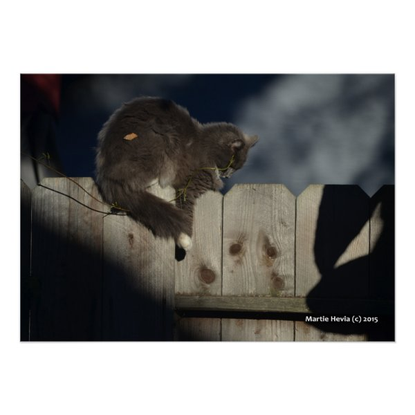 Cat on Fence (1)