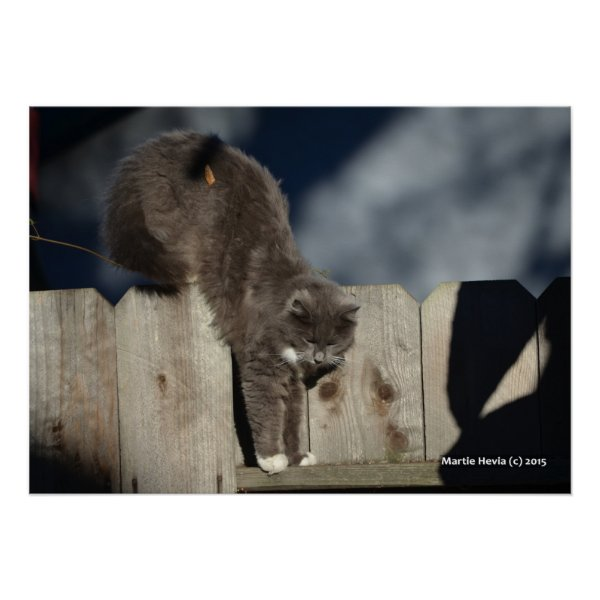 Cat on Fence (8) Poster