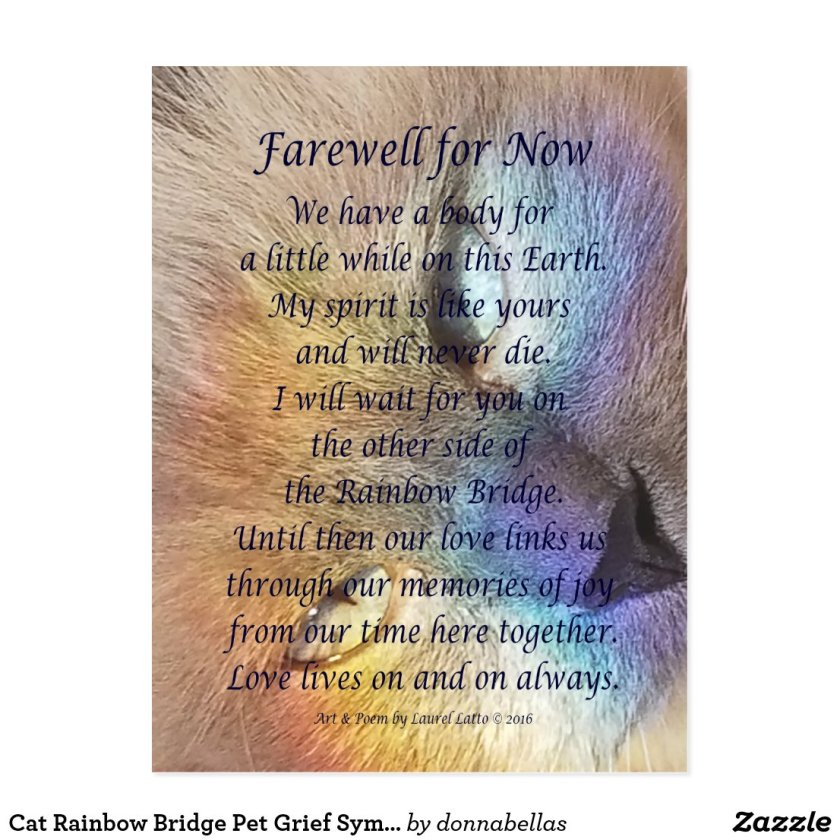 Cat Rainbow Bridge Pet Grief Sympathy Postcards