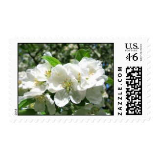 Cherry blossom zazzle_stamp