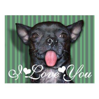 Chihuahua Dog Tongue I Love You Postcards