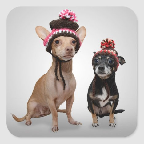 Chihuahua Dogs With Hats Photo Square Sticker
