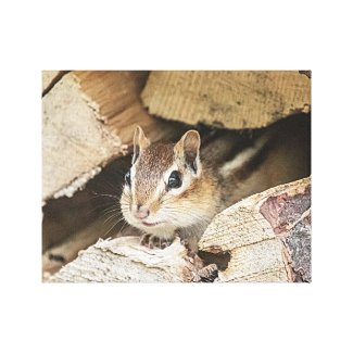 Chipmunk in a wood pile canvas print