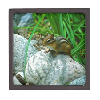 Chipmunk Premium Keepsake Box
