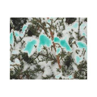 Choose Color Snow Pine Canvas Print