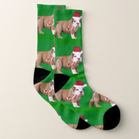 Christmas Bulldog puppy socks