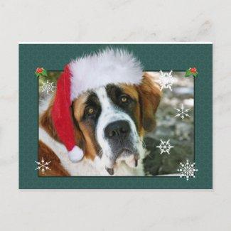 Christmas St. Bernard Dog Photo Holiday Postcard