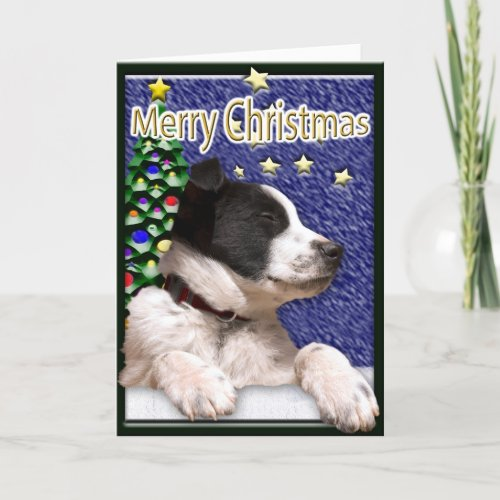 Christmas Wishes Border Collie Puppy Holiday Card