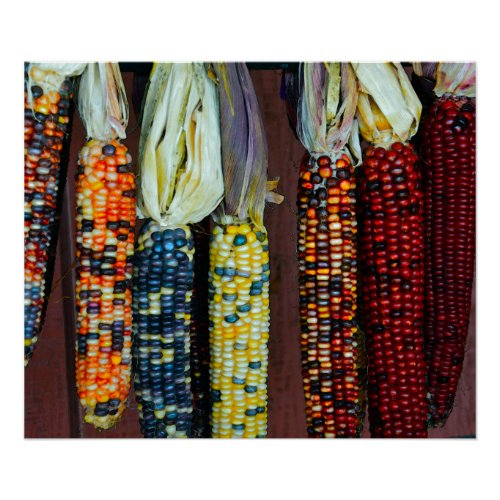 Colorful Flint or Indian Corn Poster