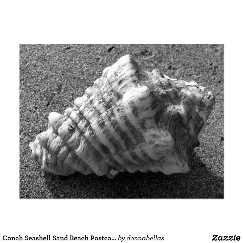 Conch Seashell Sand Beach Postcards