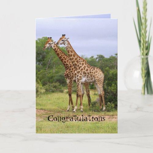 Congratulations Anniversary Giraffes Card