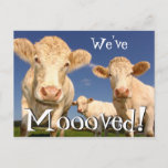 ❤️ Cows Funny New Address We've Moved Announcement Postcard