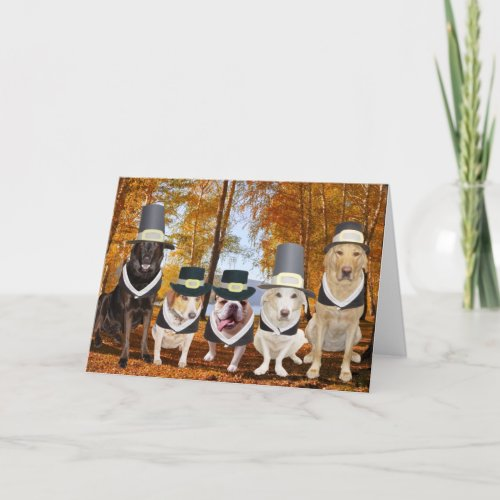 Customizable Funny Dog Pilgrims Thanksgiving Card