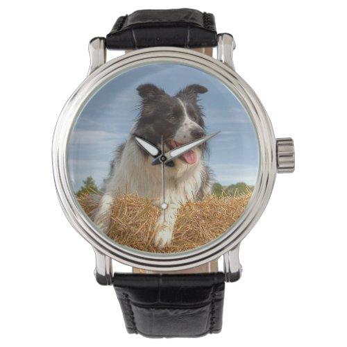 Cute Border Collie Dog Watch