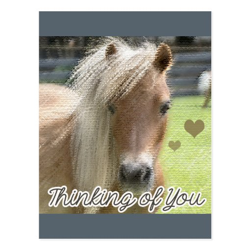Cute Horse Thinking Of You Post Card Zazzle