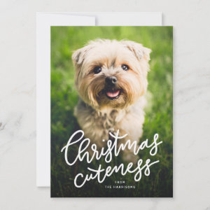 Cute pet holiday card