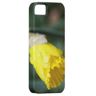 Daffodil With Water Droplets iPhone 5 Case
