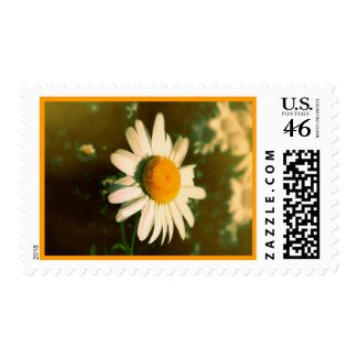 Daisy Postage (Medium)