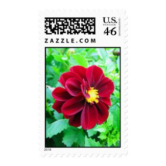 Dark red dahlia postage stamp