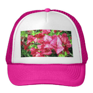 Dark Rhododendron in California Hat