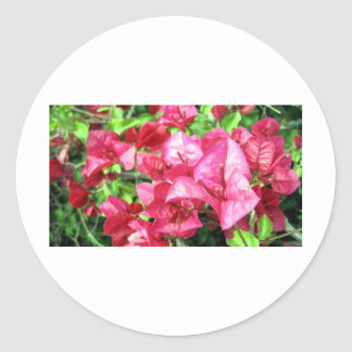 Dark Rhododendron in California Stickers