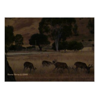 Deer in Hills Print - Select Your Frame print