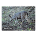 Deer Searching Poster