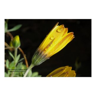 Dew Drops on a Yellow Daisy - Photo Print print