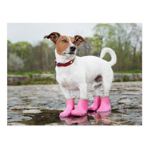 Dog In The Rain Postcard