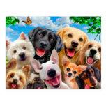 Dogs take group selfie postcard