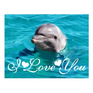 Dolphin in Blue Water Photo Image I Love You Postcard