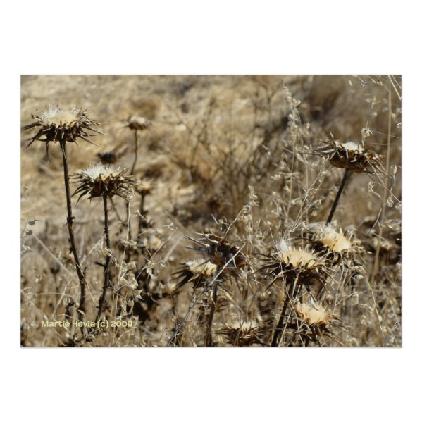 Dry Grass Poster